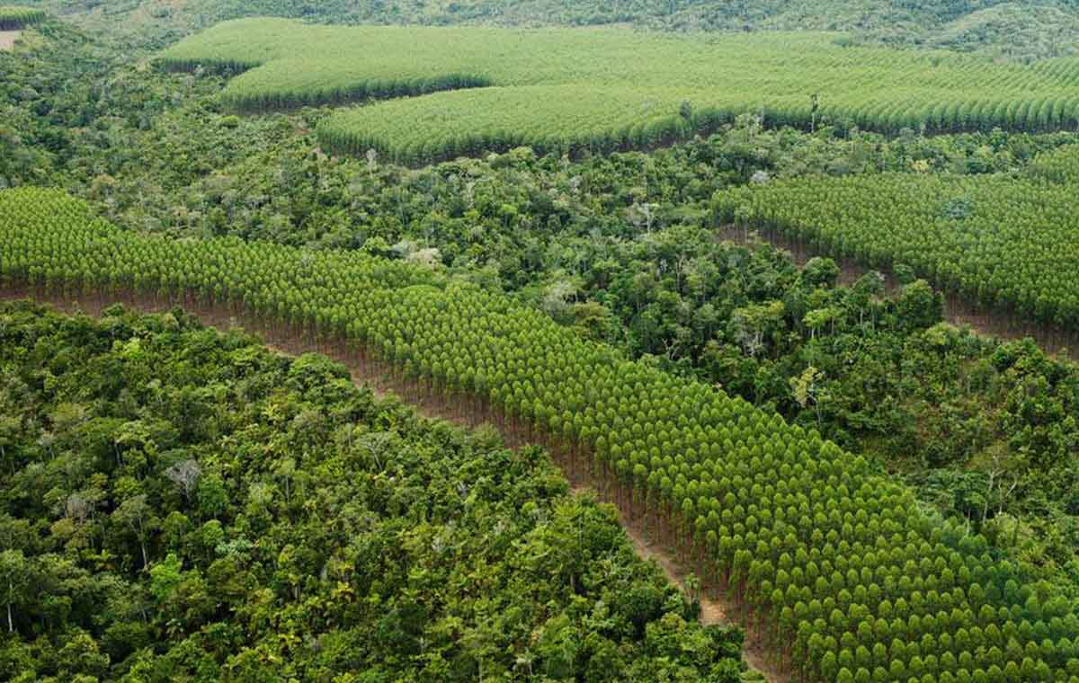 Restoring and protecting rainforest