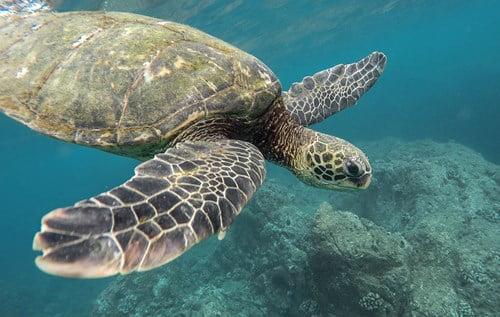 save the turtles strohhalm