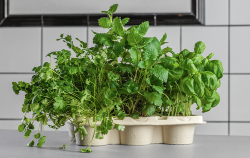 PureFiber™ can be used to replace plastic consumables e.g. in agriculture such as trays for herbs
