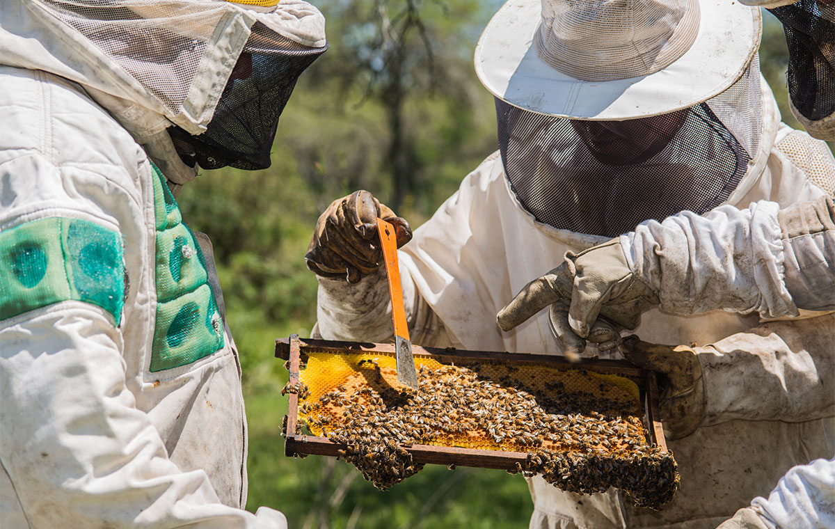 Local communities and the environment benefitting from beekeeping